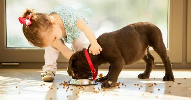 Корм для собак: правила выбора