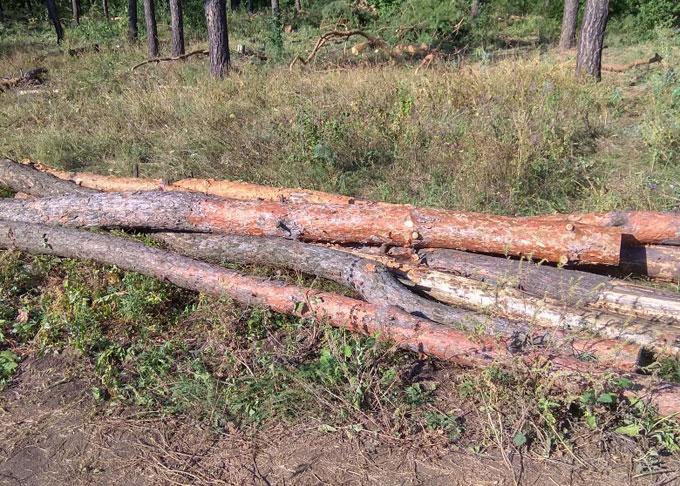 Незаконная вырубка леса возле Макеевки