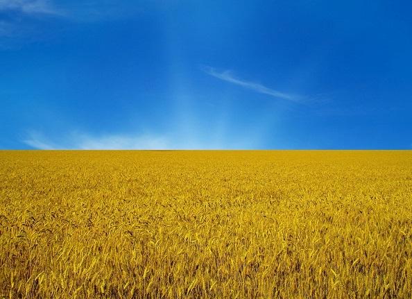 Есть ли будущее у Украины?