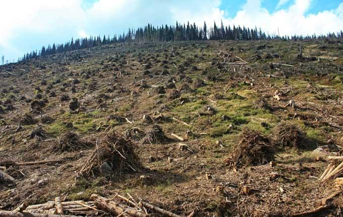 Украина в шаге от экологической катастрофы