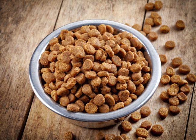Как выбрать корм для собаки. Советы от компании Royal Canin