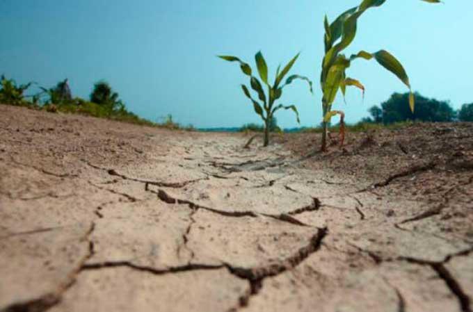 Украина станет пустыней: климатолог напугала погодой через 10 лет