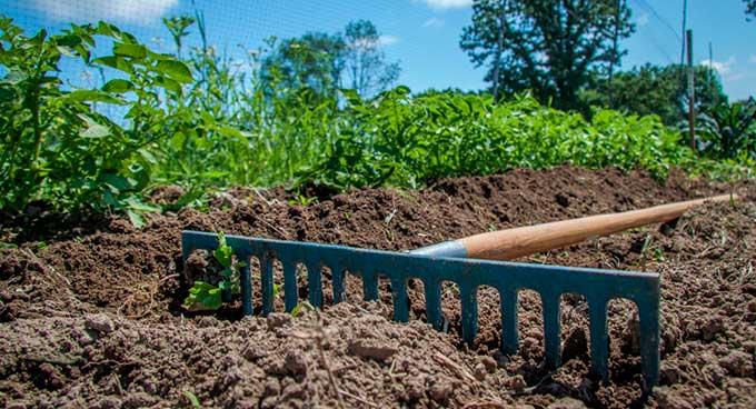Можете даже не пытаться: худшие дни в июне для работы в огороде