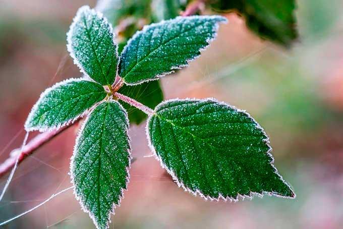 Лето опоздало: синоптик предупредила о скорых заморозках вместо жары в Украине
