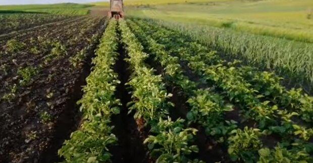 Украинцев решили обложить налогом за огороды: проект закона уже в Раде