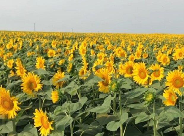 Жара будет усиливаться: украинцам рассказали, чего ждать от погоды в ближайшие годы