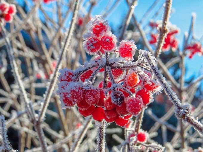 Первые заморозки ударят в сентябре: синоптик рассказал, каким областям не повезет